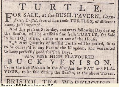 Advert for turtle