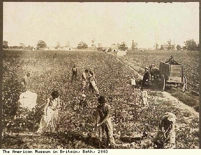 Picking Cotton, Arkansas